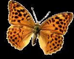 butterflytilt