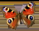 butterflytilt2